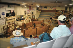 Amarillo Livestock Auction - 1