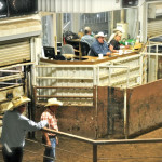 amarillo-livestock-auction-02